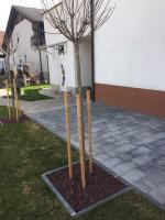 ostale aktivnosti, zasaditev dreves