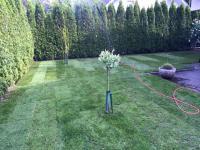 zasaditev dreves_